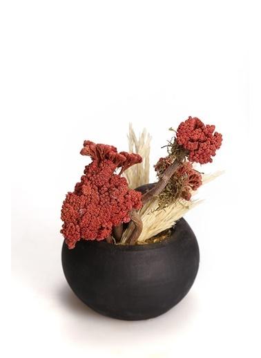 Kibrithane Çiçek Yapay Çiçek Beton Saksı Doğal Kuru Çiçek Aranjman Kc00200831 Renkli